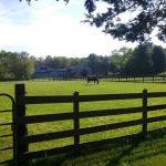 horse-150x150.jpg
